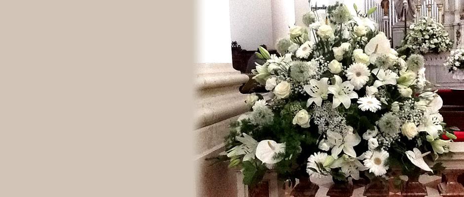 Catalogo Piante E Fiori : Acquista online fiori a padova consegna